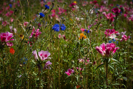 Multi-colored wildflowers in a field