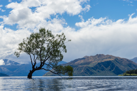 A lonley tree is silhouetted in a lake in the mountains.