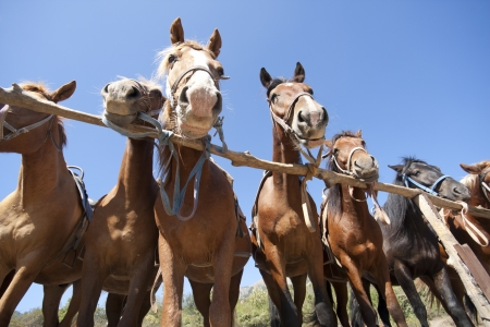 horse stable: Brown horses on ranch at corral