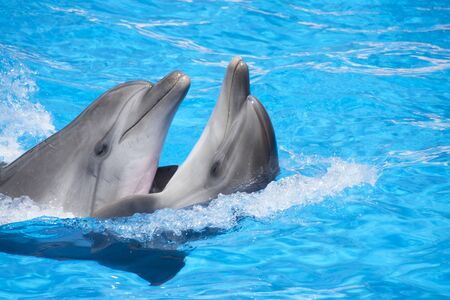 Two dancing dolphins at pool Stock Photo - 18055102