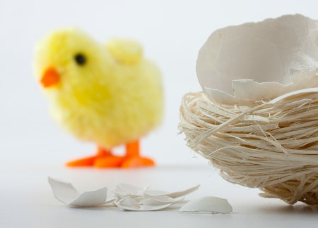 Nest with eggshell cracks and newborn toy chicken behind photo