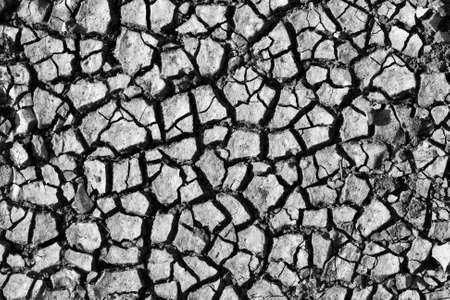 split level: Cracked soil. In BW. Use for background or texture