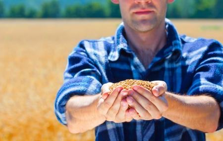 Happy farmer holding ripe wheat corns against field Stock Photo