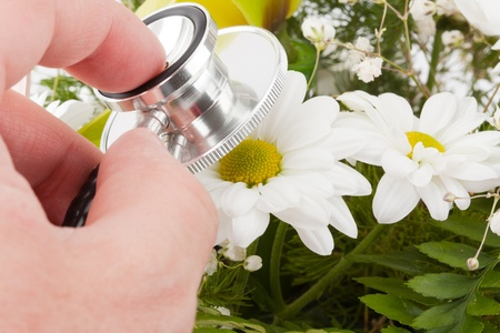 Concept of nature care. Hand examining flower by stethoscope photo