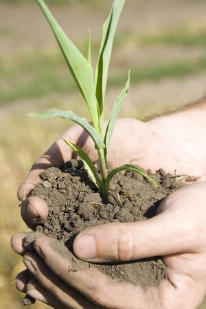 Young green plant in palms of hands Stock Photo - 18191464