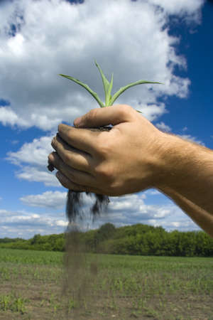 Young plant in palms of hands. Falling mud Stock Photo - 18191640