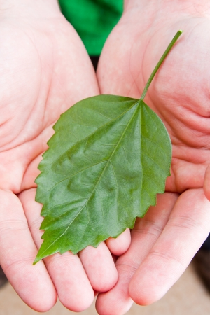 Green leaf in man palms of hands Stock Photo - 18192218