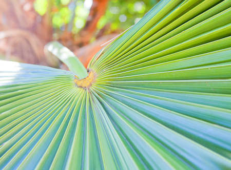 Close-up of green palm leaf Stock Photo - 18193287
