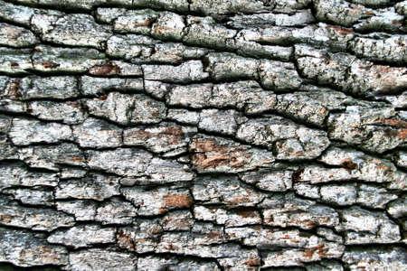 cortex: Dark hardwood cortex. Use for texture Stock Photo