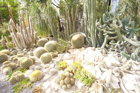 Many green cactuses in greenhouse photo
