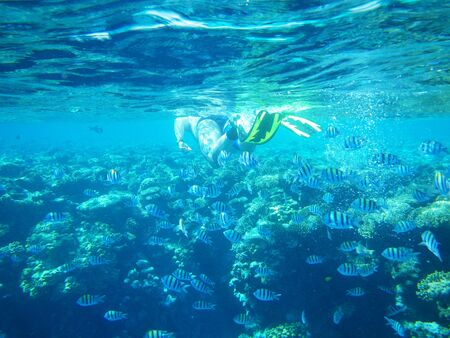 Alone diver swimming underwater with fish Stock Photo - 18312175