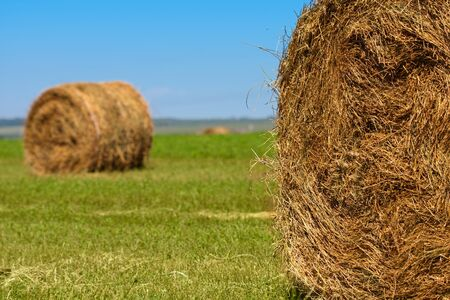 Big bales of straw on a stubble field photo