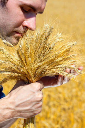 Farmer with ears in wheat field checking his harvest photo