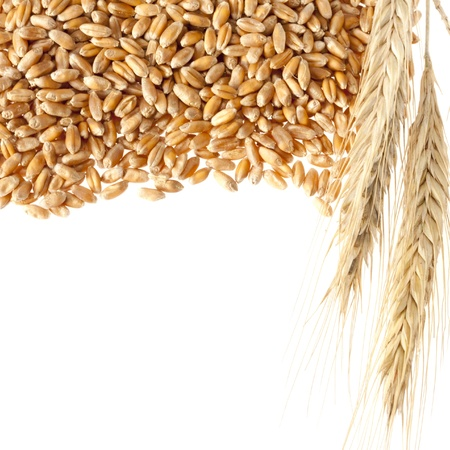 whole grains: Wheat ears with seeds. Isolated on white Stock Photo