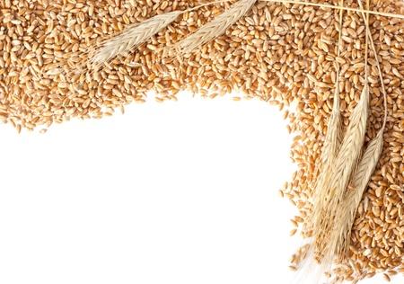 cebada: Oídos del trigo con semillas. Aislados en blanco Foto de archivo