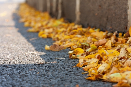 Yellow autumn leaves on roadside asphalt at sunny day photo