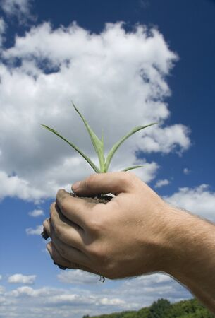 Young plant in palms of hands Stock Photo - 18363271