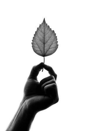 Silhouette of leaf in hand. Isolated on white Stock Photo - 18362963