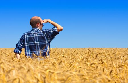 Farmer in field checking his wheat fields photo