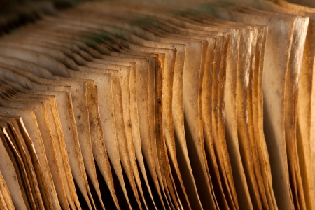 old papers: Pages of open ancient book. Close-up view