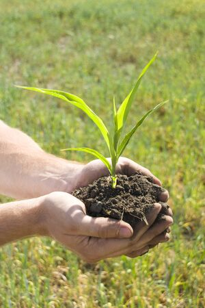 Young green plant in palms of hands Stock Photo - 18433715