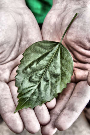 Green leaf in man palms of hands Stock Photo - 18431271