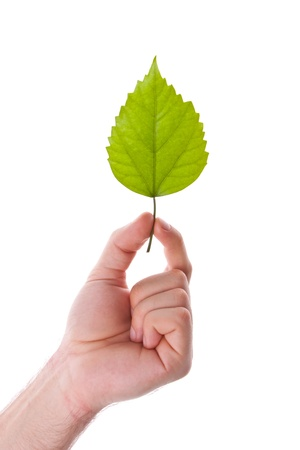 Green leaf in hand. Isolated on white Stock Photo - 18430500