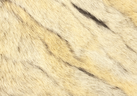 Animal fur. Use for texture or background photo