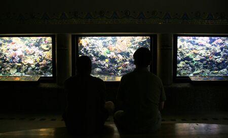 aquarium visit: Two spectators in aquariums hall Stock Photo