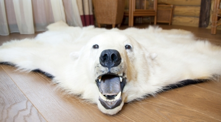 Angry polar bear skin on the floor Stock Photo - 18477792