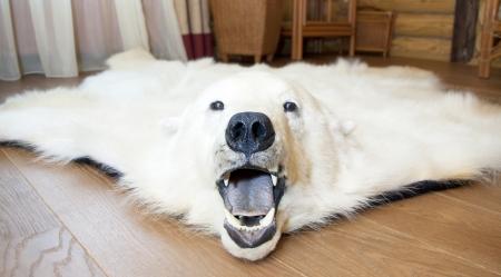 Angry polar bear skin on the floor Stock Photo - 18477792