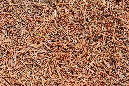 Nadelbaum Tannennadeln. Verwenden Sie für Textur oder Hintergrund