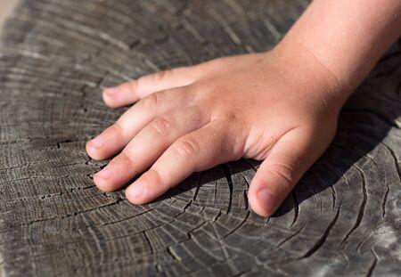 Child hand on old cracked stump photo