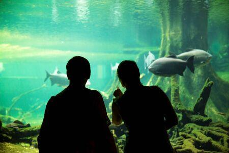 oceanarium: Silhouette of couple watching fishes at the oceanarium Stock Photo
