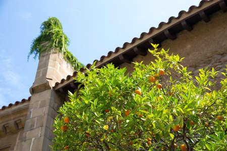 tangerine tree: Tangerine tree on old spanish street Stock Photo