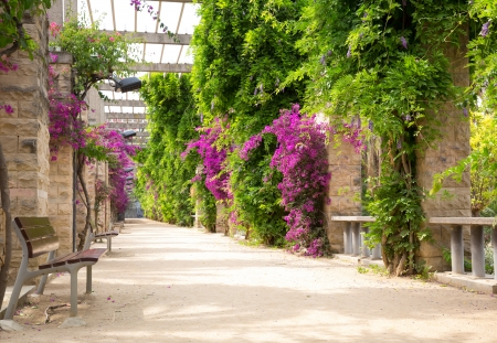 summer garden: Alley with blooming flowers in spring park Stock Photo