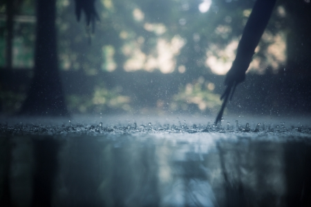 rainy day: Drops of heavy rain in the tropical jungles Stock Photo
