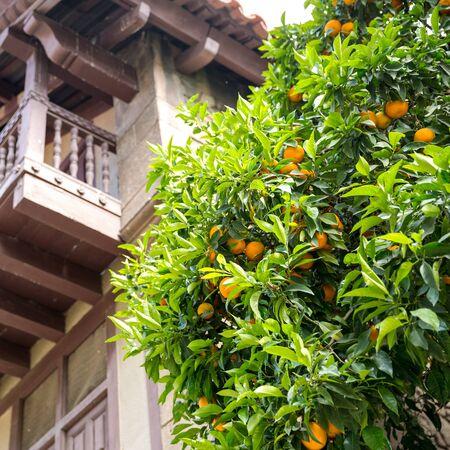 Mandarijn boom op oude Spaanse straat