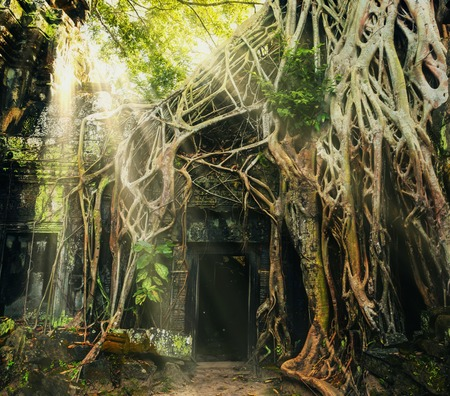 Oude ingang van Angkor tempel bedekt met boomwortels Stockfoto