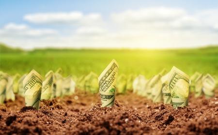 gain money: Dollars américains poussent sur le lit de jardin sur une prairie