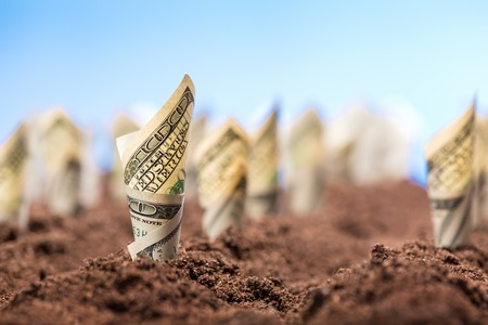 agriculture symbol: American dollars grow on the garden bed from the ground