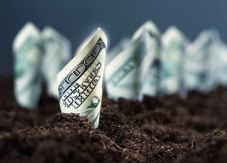 Garden bed of american dollars Stock Photo - 31180411