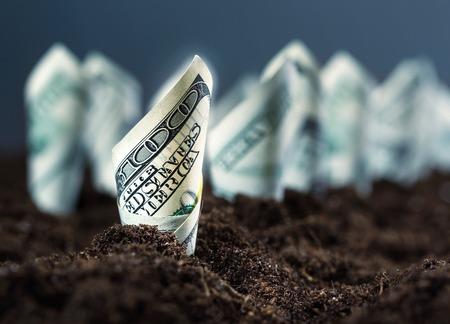 arbre feuille: lit de jardin de dollars am�ricains
