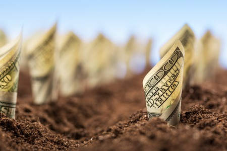 cash crop: Garden bed of american dollars grow from the ground - the concept of profit Stock Photo