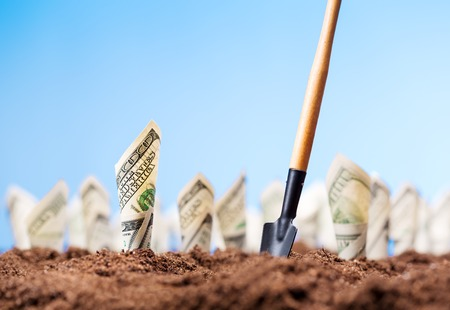 American dollars grow on the garden bed with shovel