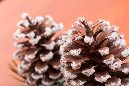 fir cones: Two fir cones on a wooden table. Closeup view