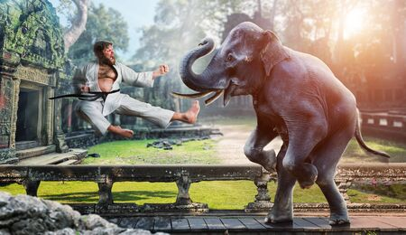 martial art: Furious karateka is fighting with an elephant in the ancient temple