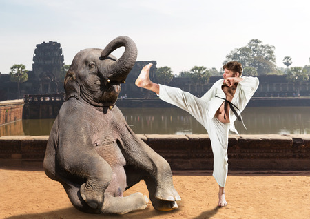 animal fight: Mad fat karateka is fighting with an elephant