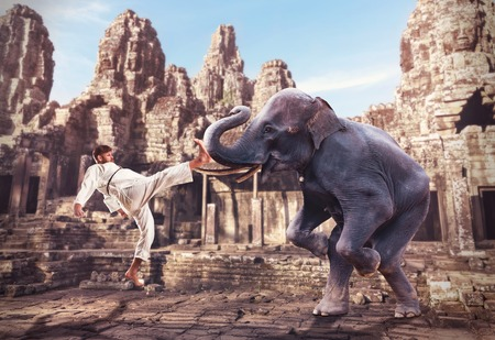 animal fight: Karateka is fighting with an elephant in the ancient temple