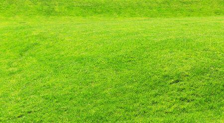 grass beautiful: Beautiful green grass. Background or texture Stock Photo
